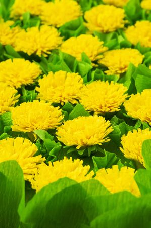 Artificial yellow Flowers lined with in vertical