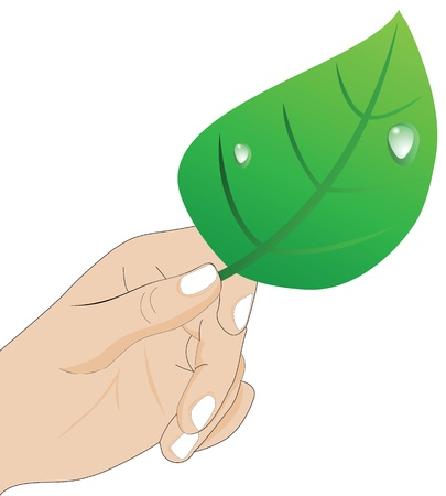 Hand holding a green leaf with water drops on a white background