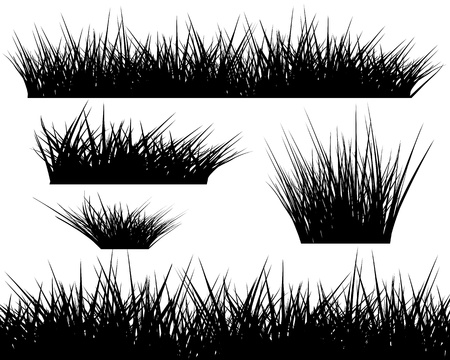grass silhouette: Silhouette of grass on white background for your design Illustration