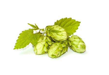 Hop cones with leaves on a white background photo