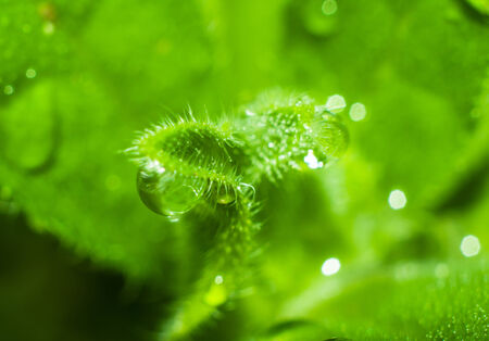 Macro photo of plant with dew drops close up for your design