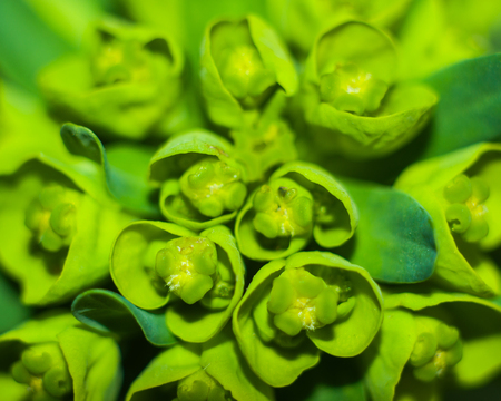 Macro shot of green plants for your design