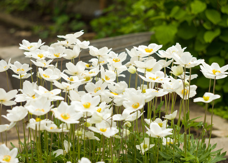 An anemone closeup forest for your design Standard-Bild