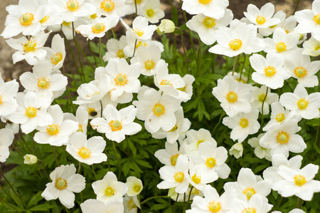An anemone closeup forest for your design photo