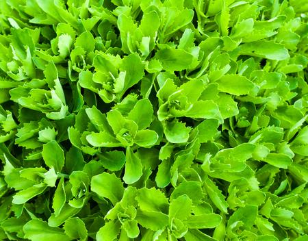 Floral background of leaves close up for your design Standard-Bild