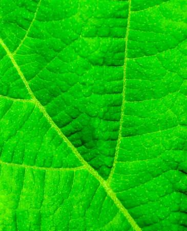 Green leaf close up for your design Standard-Bild