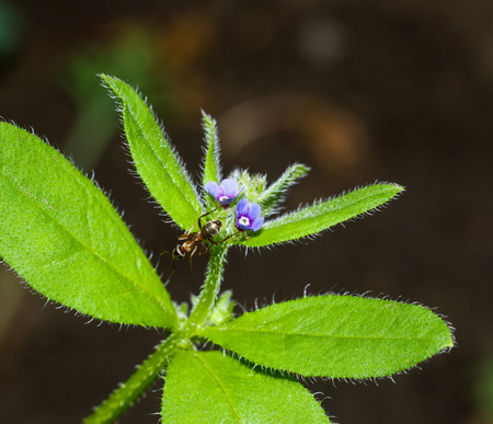Macro shot of a flower with ant for your design
