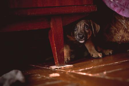 Klein puppy verstopt onder kledingkast