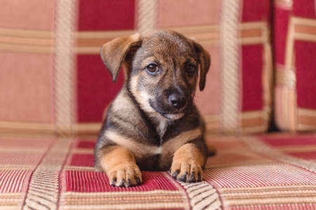 puppy lying on the sofa