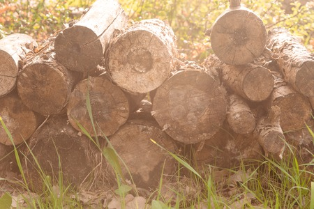 pine wood stacked in a pile Stockfoto