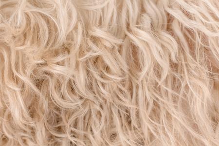 white dog curly hair, texture Stockfoto