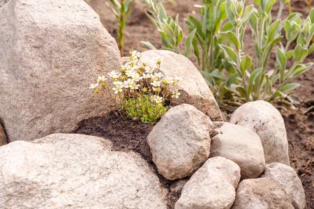 decorative tree in the rock garden