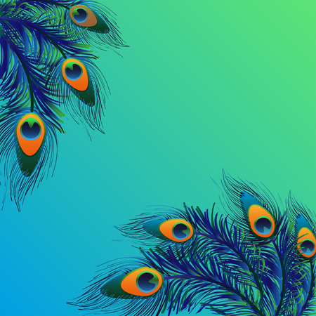 Design background with feathers peacock. Vector card.