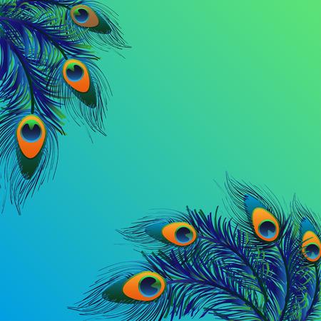 pluma: Dise�o de fondo con plumas de pavo real. Vector de la tarjeta.