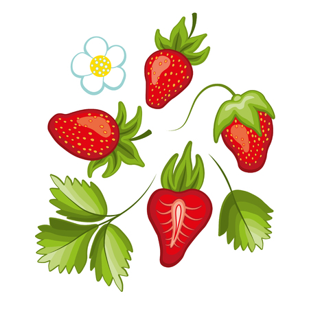 Different styles of strawberries illustrations. Can be used in your own design, illustration, appearance and etc.  イラスト・ベクター素材