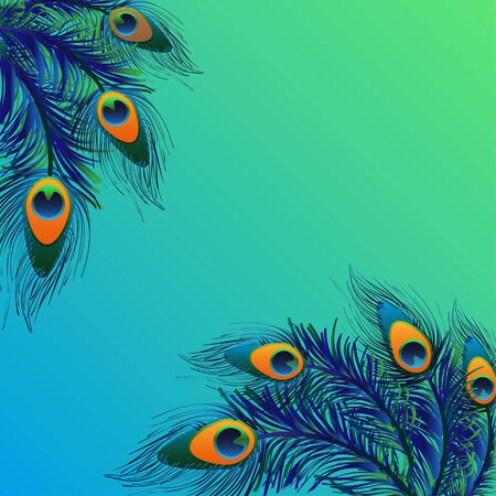 ornithological: Design background with feathers peacock. card. Stock Photo