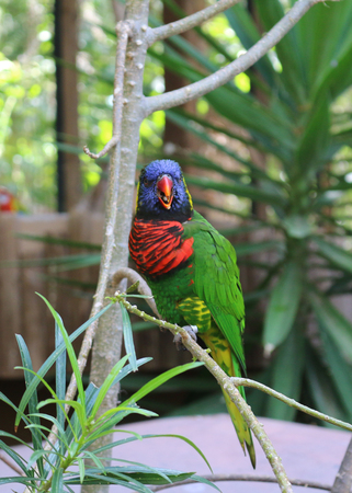 beautiful cute funny bird of red feathered parrot outdoor on green natural background.