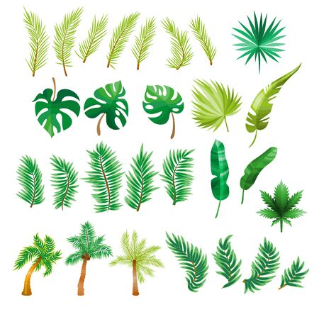 Tropical palm leaves, jungle leaves, split leaf, philodendron leaves, set isolated on white background Illustration