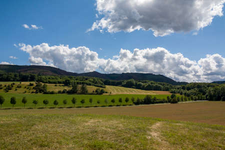 Saxony-Anhalt, Dr beck. Panoramic over forests with an old dead and dry tree in Sommer, Germany, sunny day, blue sky Banque d'images