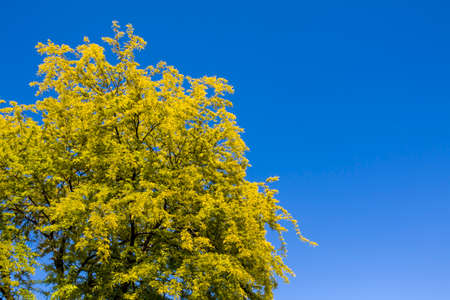 Green tree and blue sky.Great as a background,web banner