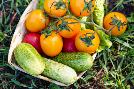 Fresh vegetables in a basket. Stock Photo
