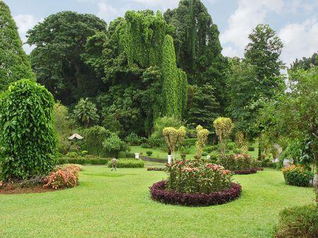 kandy: Botanical Garden, Kandy, Sri Lanka