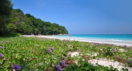 natural vegetation: Paradise Beach at Ta chai Island. Similan Islands, Thailand