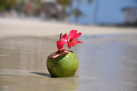 freshening: Beautiful cocktail in a coco on seacoast  Mauritius island Stock Photo