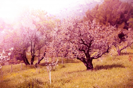 Blooming tree on grass  photo