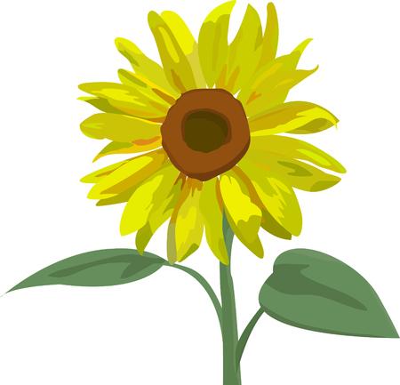 Illustrazione vettoriale in EPS 10 formato del bel giallo girasole con foglie. Stilizzato estate fiore giallo isolato su sfondo bianco. Elementi di disegno floreale. Vettoriali
