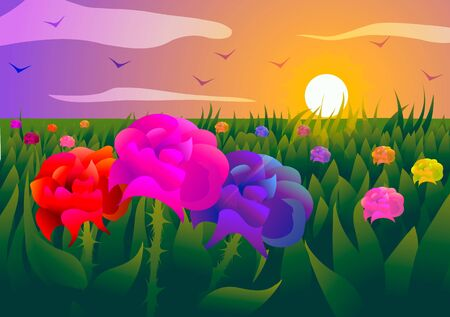 Vector illustration. Field of roses at sunset. 向量圖像