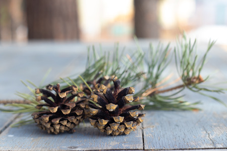 Three brown pine cones laying in the corner of image and isolated on a background of gray wood grain texture flooring making a beautiful background