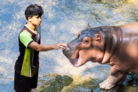 Pattaya, Thailand - May 14, 2019: The Hippopotamus In The Zoo. Hippopotamus has a tickling nose Redactioneel