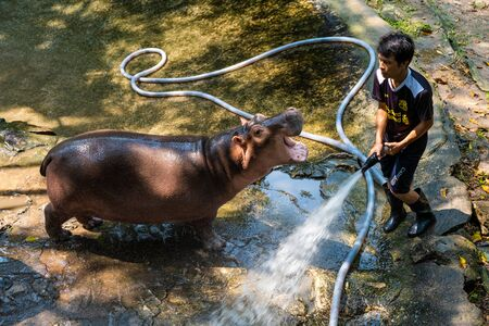 Pattaya, Thailand - May 14, 2019: The Hippopotamus In The Zoo. Hippo wash with a hose