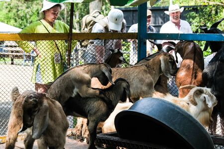 Pattaya, Thailand - May 14, 2019: People with grass to feed and give grass to goats at the zoo Redactioneel