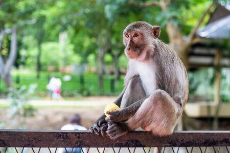 Mono pensativo se sienta en la rama de un árbol en la naturaleza. Foto de archivo