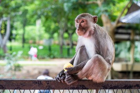 Pensive monkey sits on a tree branch In nature. Stock fotó