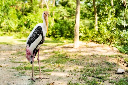 Stork in the zoo. Concept animals and birds in the zoo. 版權商用圖片