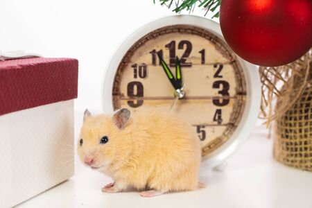 New Year concept. Cute white domestic rat in a New Years decor. Symbol of the year 2020 is a rat