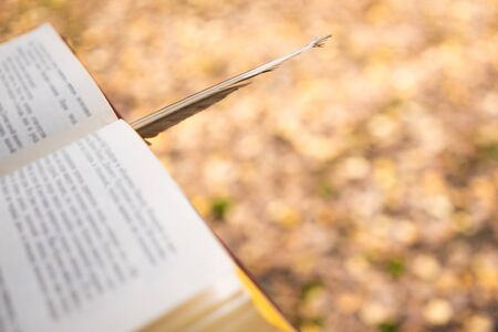 Background image of an open book in an autumn yellow forest. Copy space.