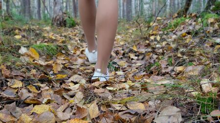 female legs in white sneakers walk through the autumn forest. Stok Fotoğraf - 132126090
