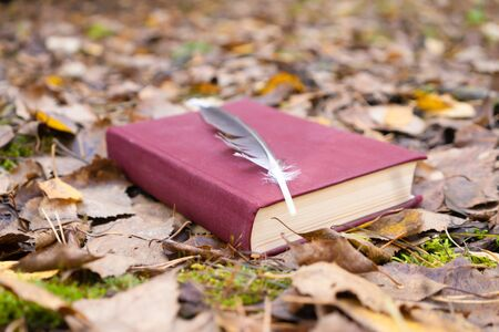 Red book with bird feather on autumn leaves.