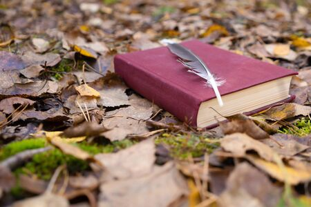 Red book with a writing pen on autumn leaves. Stock Photo