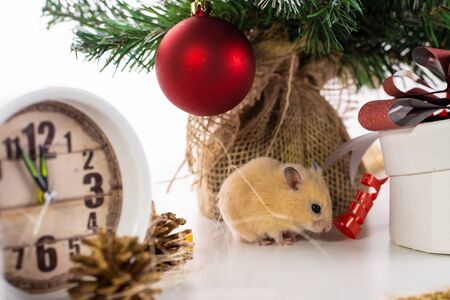 The symbol of the new year 2020 is a rat near the New Year tree, watches and gifts. New year concept. Stockfoto