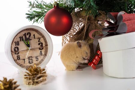 Symbol of the new year 2020. rat near the New Year tree, watches and gifts Stockfoto