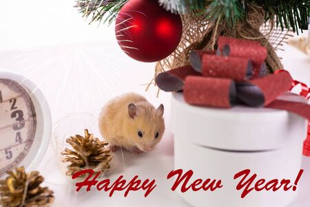 rat sits near a Christmas tree and watches. Symbol of 2020, new year, christmas. Happy New Year Greeting Card.