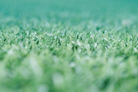 Green grass. background texture. fresh spring green grass