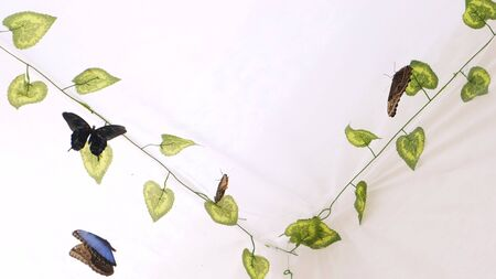 Butterflies fly in an artificial garden on a white background. Copy space.