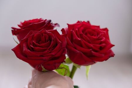 Three red roses in a hand. copy space - Valentines and 8 March Mother Womens Day concept.