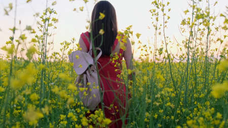Beautiful female walks in a rapeseed or rapeseed field of a farm at sunset.